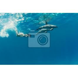 Fototapeta a pair of dolphins playing with beautiful girl underwater