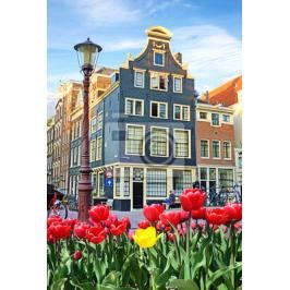 Plakat Beautiful landscape with tulips and houses in Amsterdam, Holland